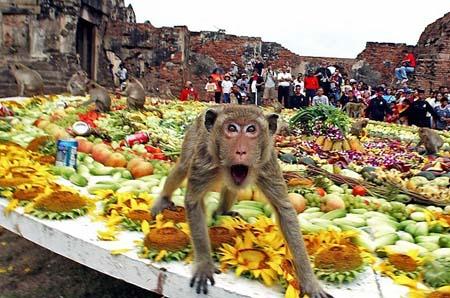 جشنواره میمونها فستیوال میمون ها در تایلند اسراف مواد غذایی اسراف گرایانه آداب جاهلی و رسمهای جاهلانه