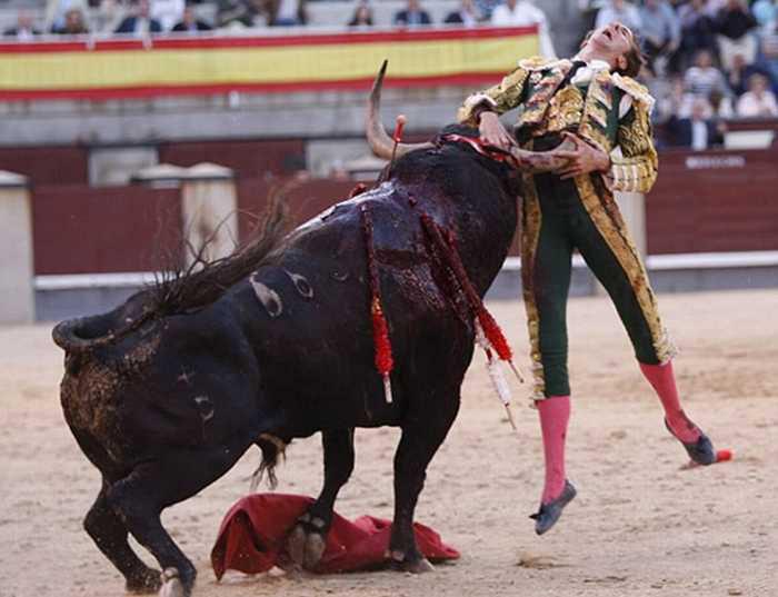 آزاد کردن گاوهای وحشی و آسیبهای جدی بدنی و رسمهای جاهلانه